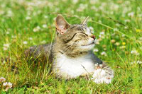 Allergy Testing and Immunotherapy for Cats